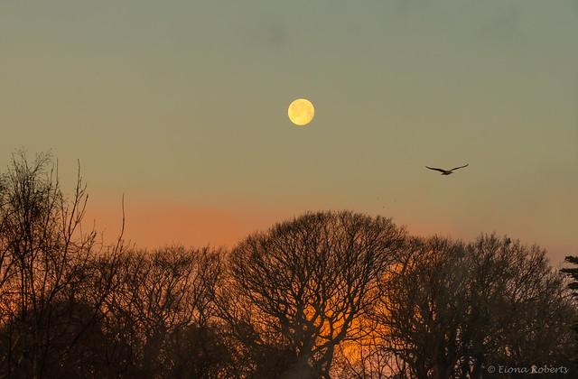 366 /366 Last Moonset of 2020