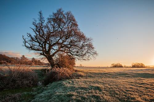 clevedon kenn somerset england uk sunrise sun field landscape tree trees frost frosty winter december