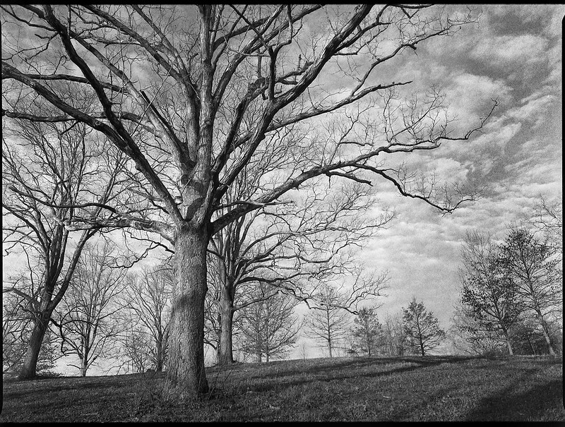 winter landscape, uphill, bare trees, speckled sky, early evening,Biltmore Estate, Asheville, NC, Mamiya 645 Pro, mamiya sekor 45mm f-2.8, Fomapan 400, HC-110 developer, 12.29.20