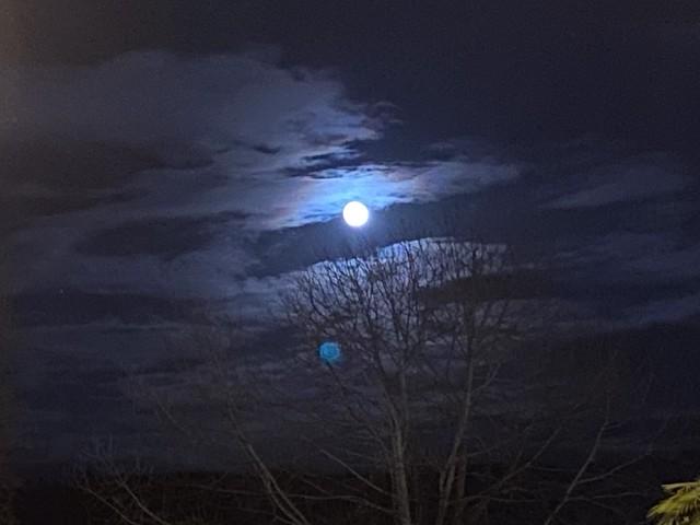Luna de Algorta
