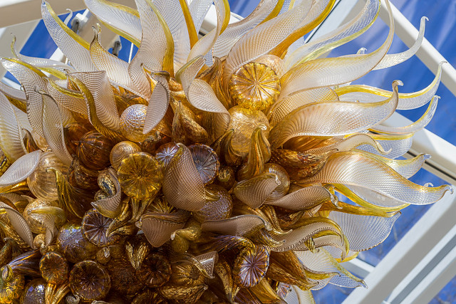 Sea anemones in the blue