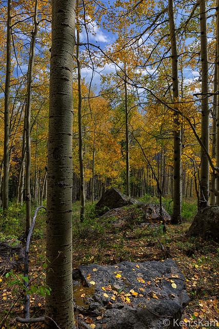 Fall Rocks and Trees