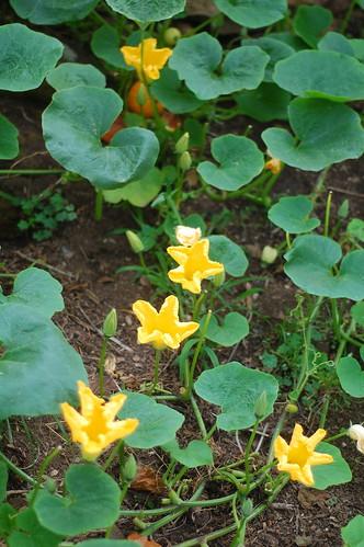 Portugal Garden4