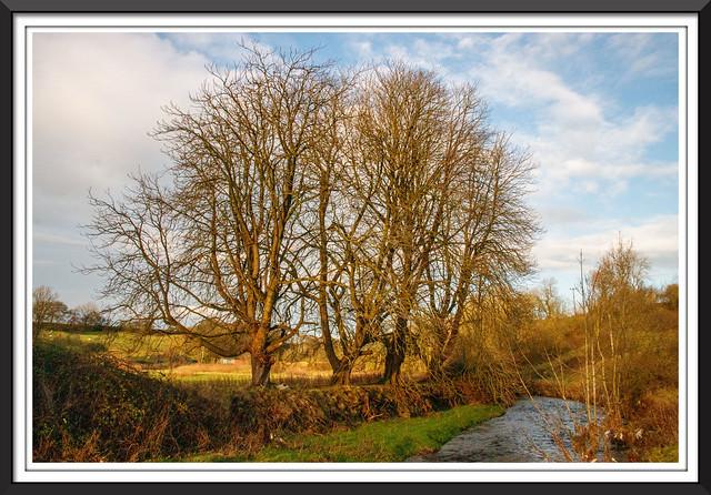 Hyndburn Brook, Rishton.