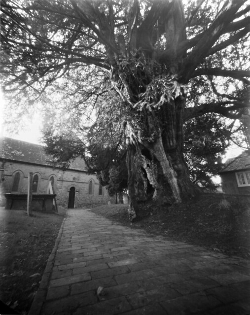 Wivelsfield Church and it's ancient yew tree