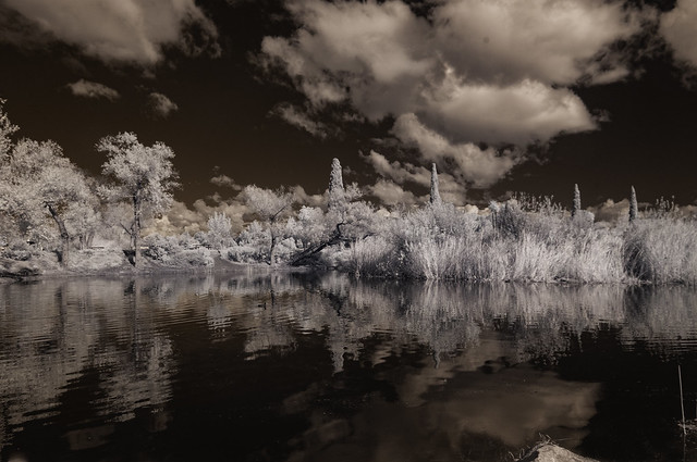 Reflecting On December Clouds At Santee Lakes - IR