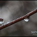 Icy droplet