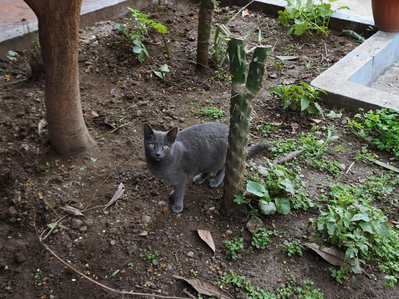 Morocco cats