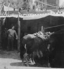 Inicis de la Hípica Cerdanyola al Passatge de l'Ajuntament de Cerdanyola, anys 60 - Revista dels Tres Tombs de Cerdanyola, 2007