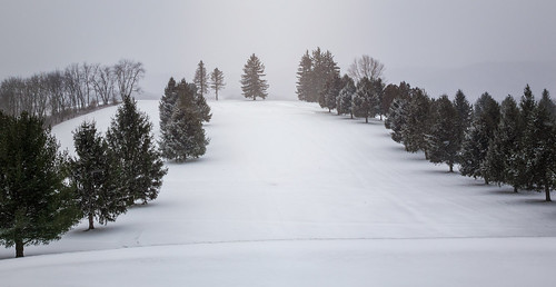 pine trees snow sky golf resort course winter cold blustery landscape scenery