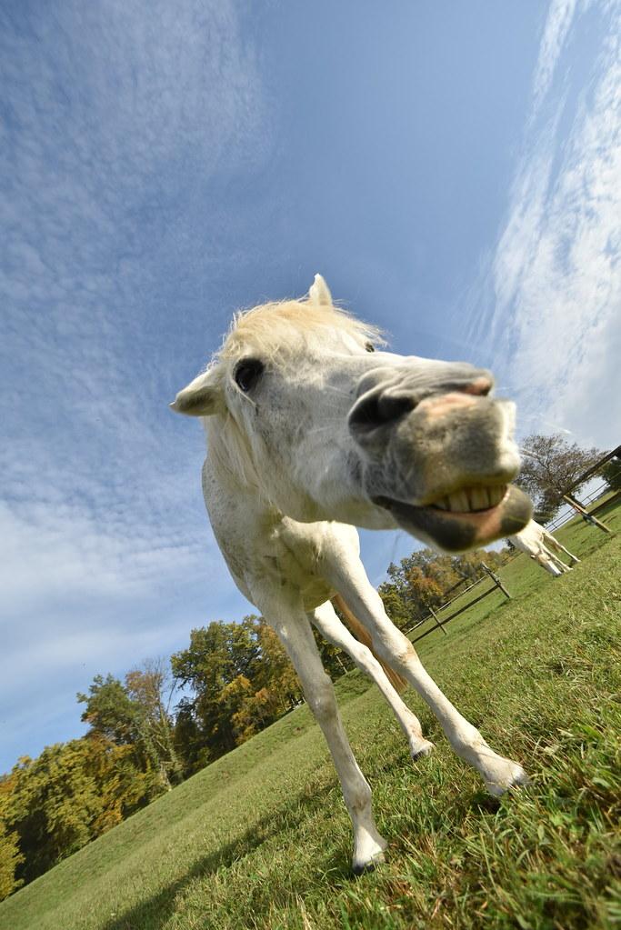 Arabhorse