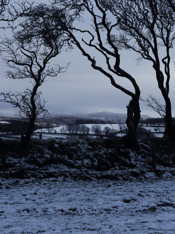 Belstone Common, framed from East Hill