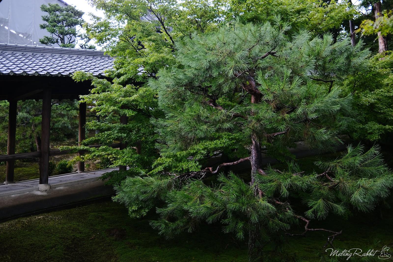 2020-07_kyoto_DSCF1121(1)_lr