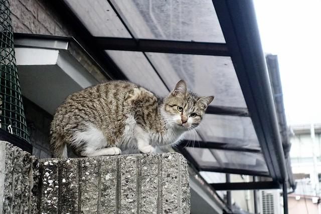 Today's Cat@2021−01−01