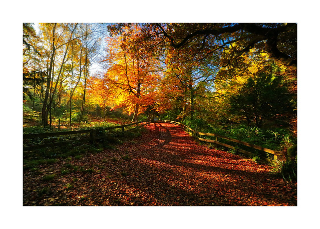 Holly Hill Country Park, Hampshire