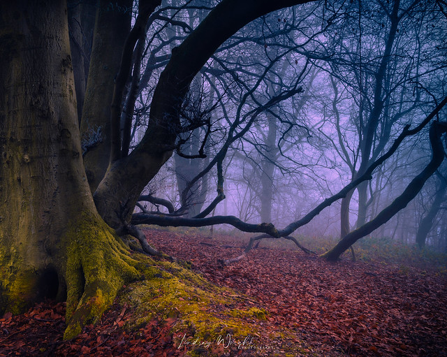 The old beech wood (Explore 01-01-2021)