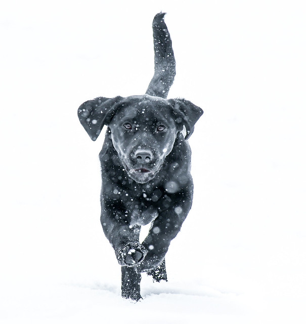 5 Month Old Snow Puppy