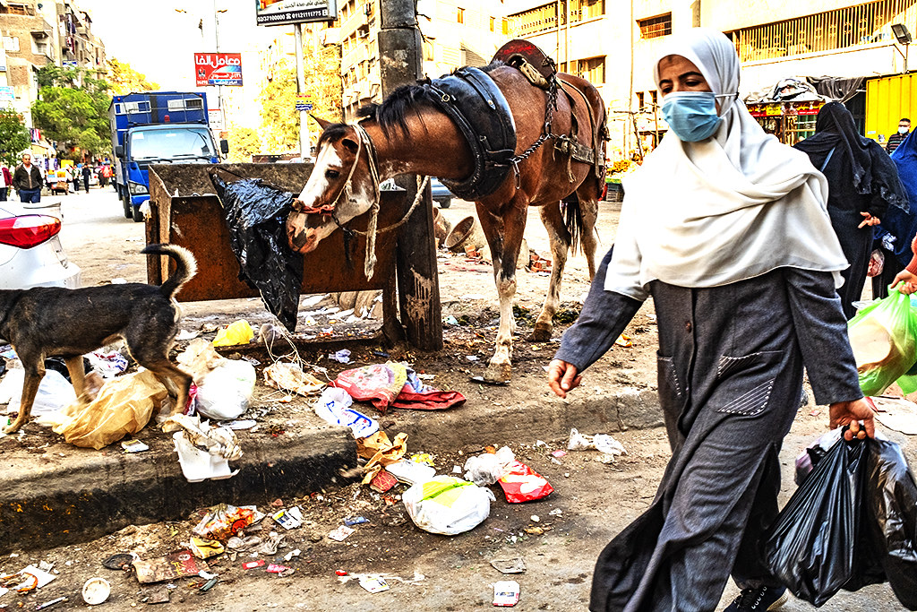Horse eating from garbage in Imbaba on 1-1-21--Giza