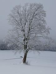 Winterbaum - Schafmatt