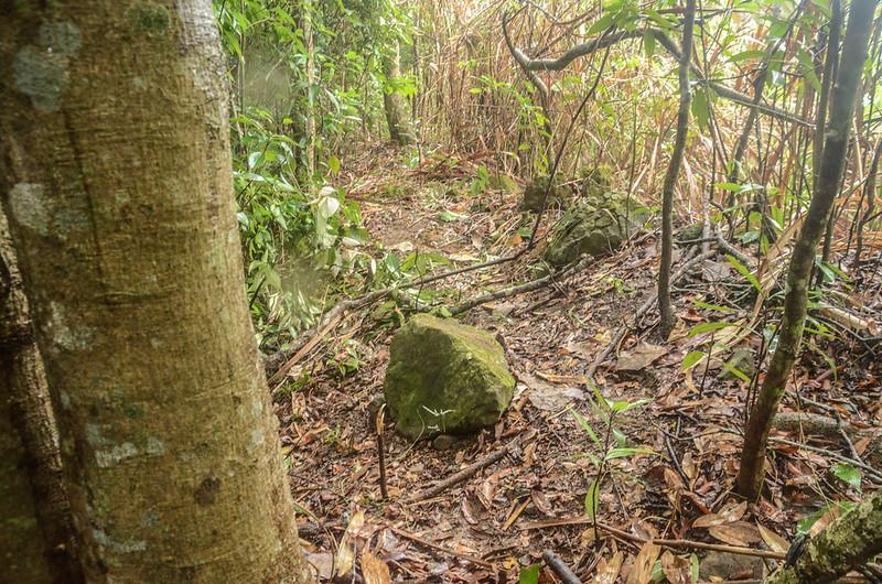 牛舌仔山友自刻自然石森林點 (2)