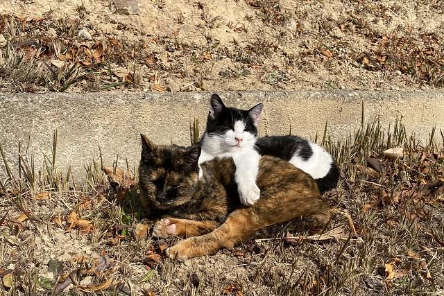 Today's Cat@2021-01-02