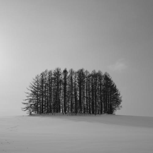 02-01-2020 (3rd)(at Biei-vol02) (6)