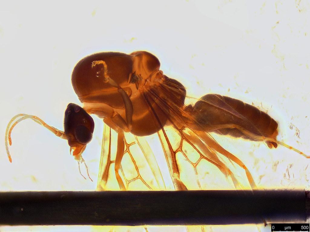 22b - Formicidae sp.