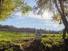 Ca' Del Bosco vineyard