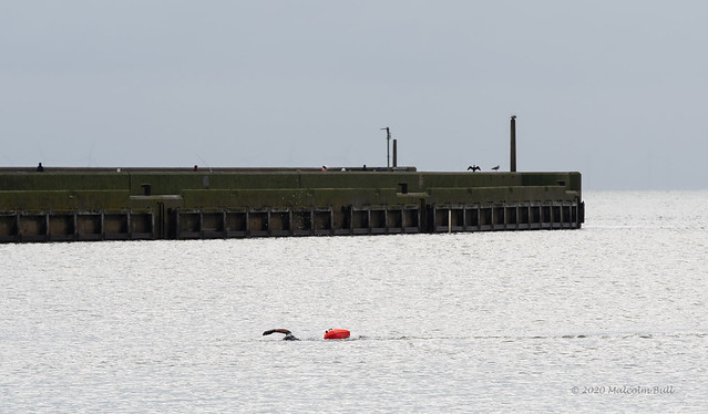 Open Water Swimming (20)