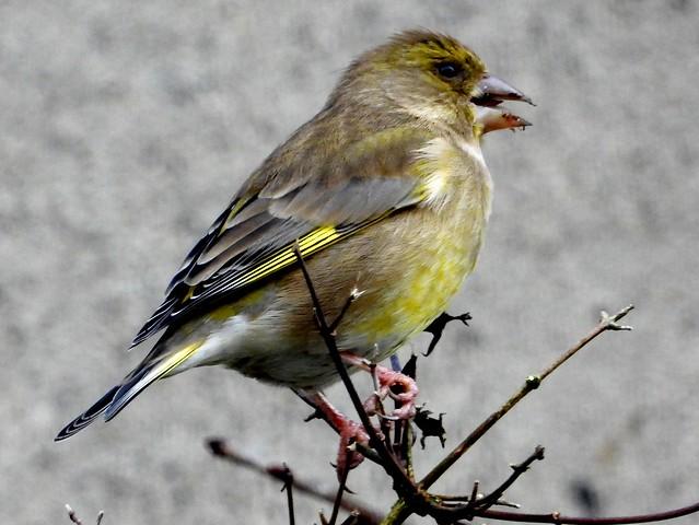 Bird Challenge 2021