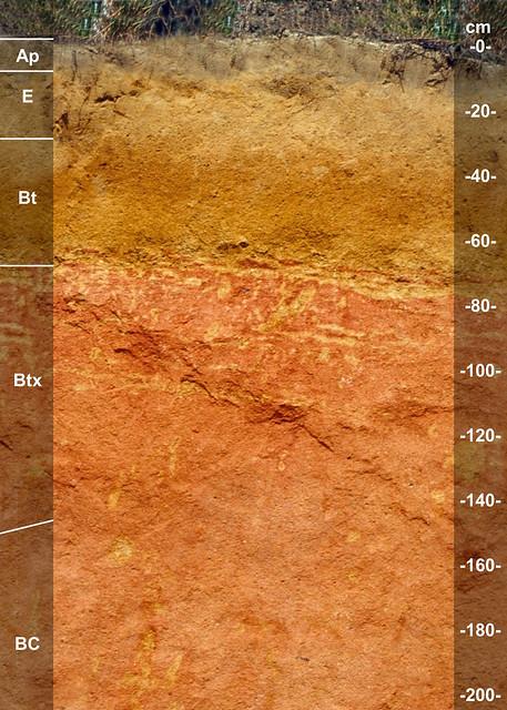 Vaucluse soil series