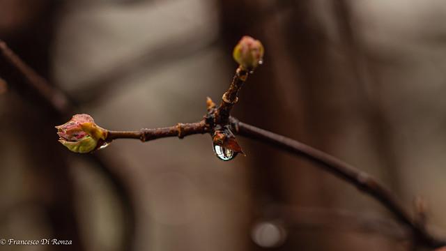drops .1)2012/5147-1