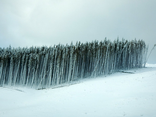 Snowy trees on the Coquihalla Hwy in BC, Canada