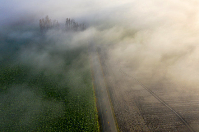 Skagit Valley Road in the Fog
