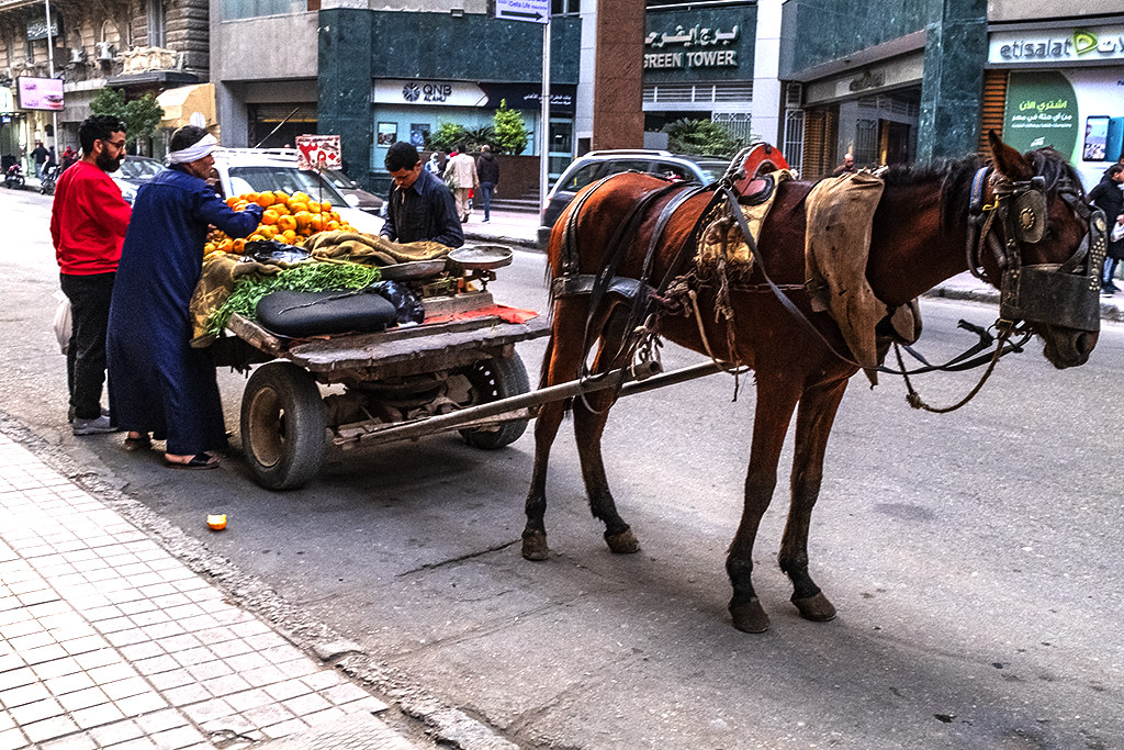 Horsedrawn cart in downtown on 1-2-21--Cairo