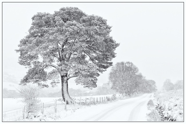 Hawnby Moor