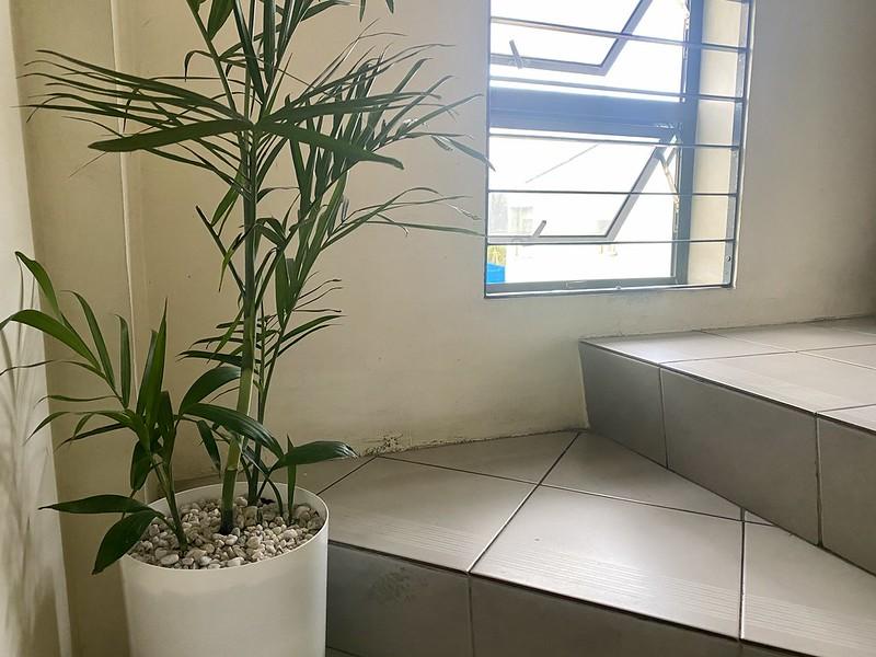 Plantita Tips