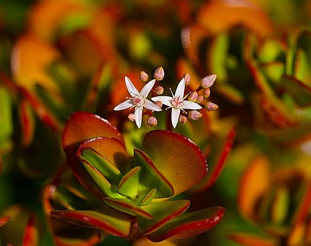 Flor de Barrio