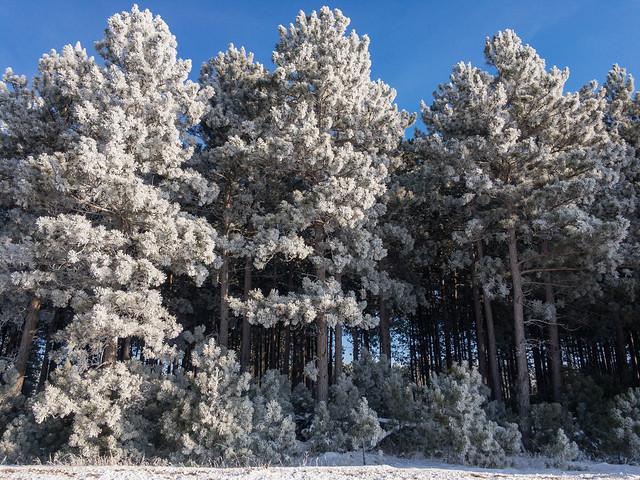 Frosty Trees-0545.jpg