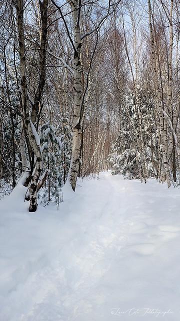 Winter scene ( In Explore )