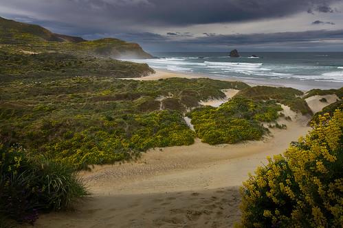 beach coastallandscape coastline dune dunedin dunes grandcoastalphotography landscapephotography nature natureandlandscapephotograph newzealand otago otagopeninsula sandflybay seascape southisland nz natureandlandscapephotography