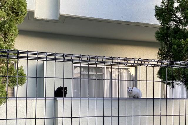 Today's Cat@2021−01−03