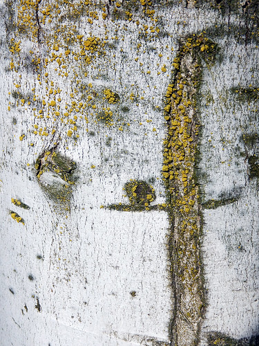 Tree bark study