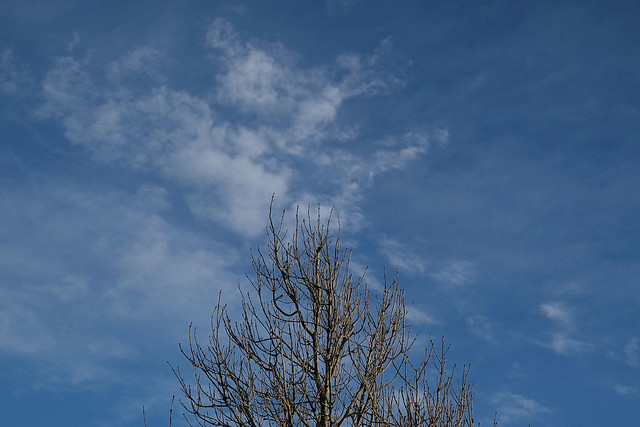 Tree, sky and cloud, Hatchbank Road