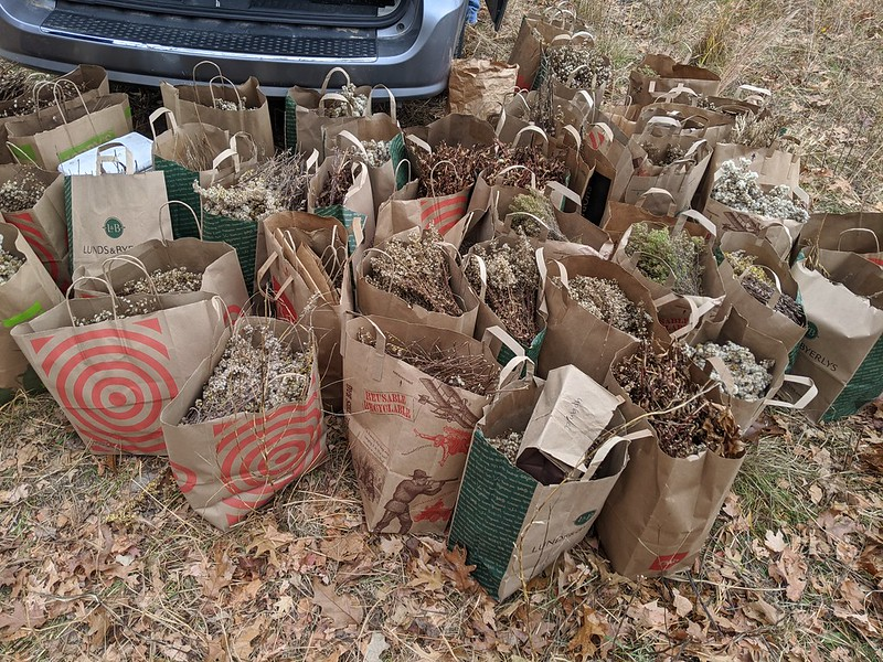Paper grocery bags full of dried plants on the ground next to a van.