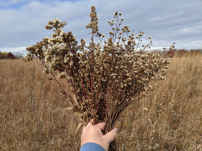 A hand holding dried flowers, with fingers holding the three species separate.