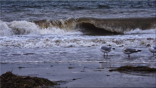 Storm surge on the Baltic coast