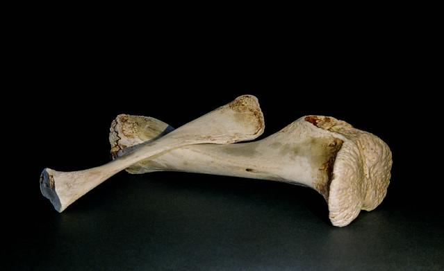 Day 345 (10th Dec) - Dem Bones!