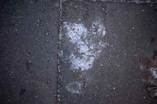 2/365 Frosty Leaf