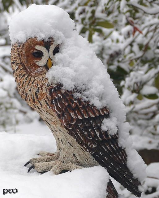 Hurra,es hat geschneit....(3)